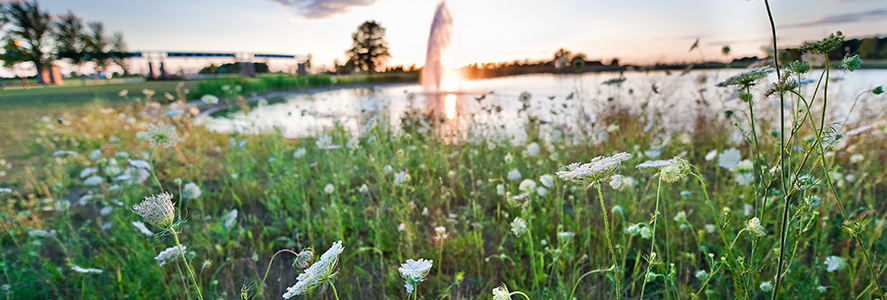 Front pond, flowers, with fountain in distance