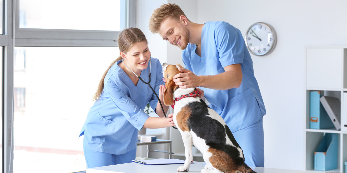 A Veterinary Assistant and a Veterinarian doing a check-up on a dog.