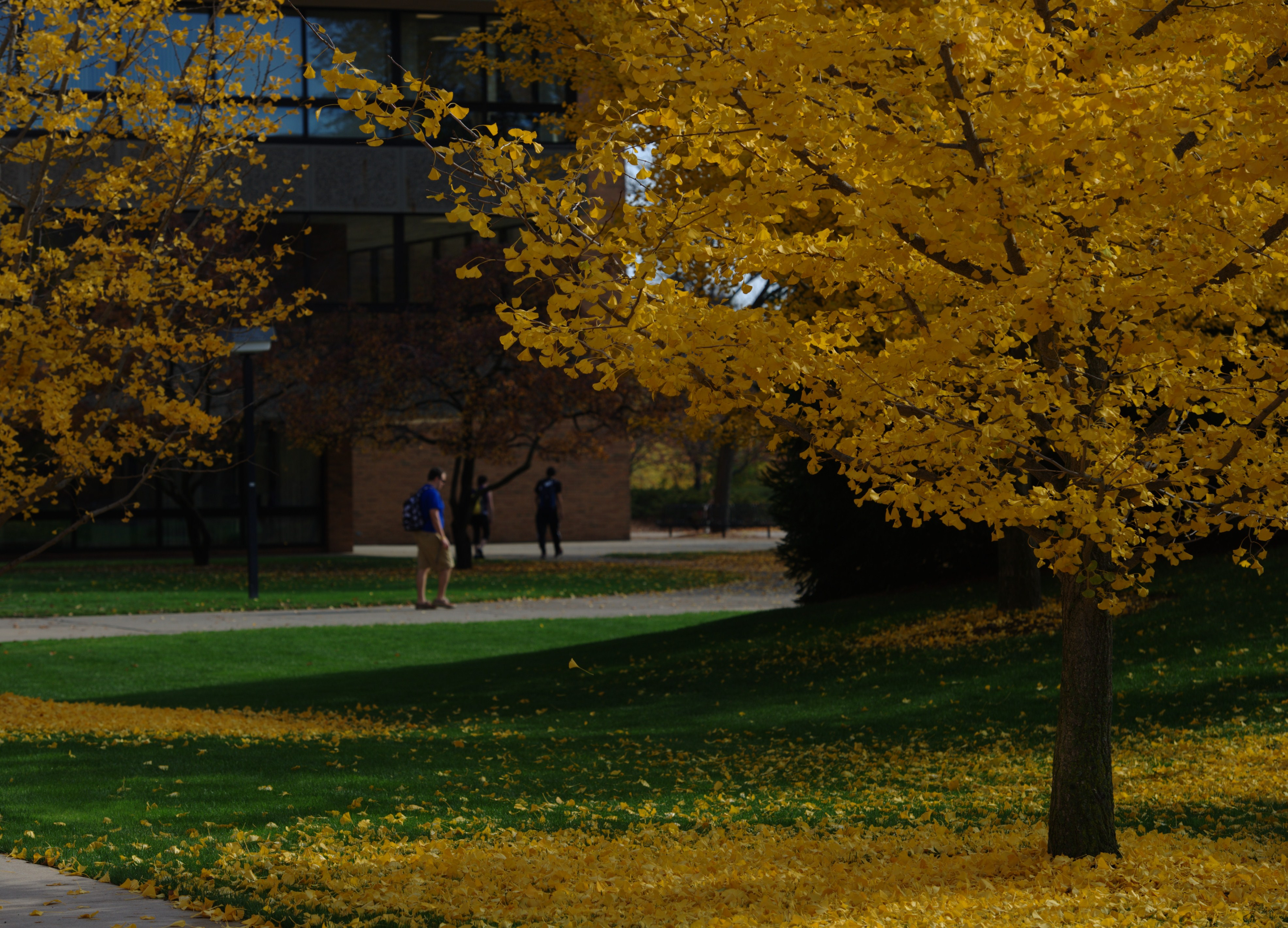 Photo:  Campus view during the Fall.