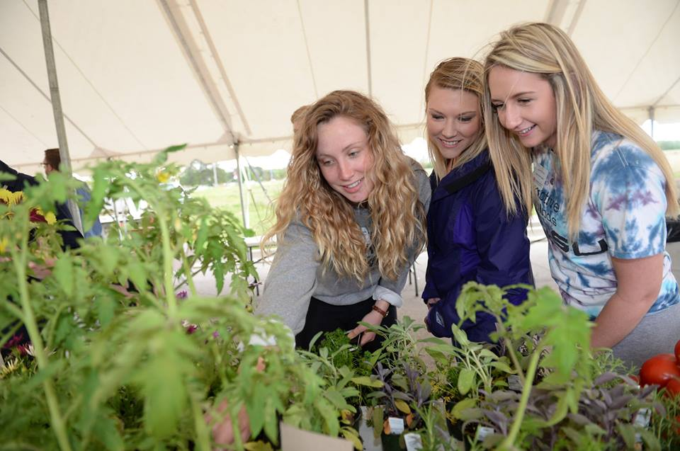 Three young women look at new tomato plants.