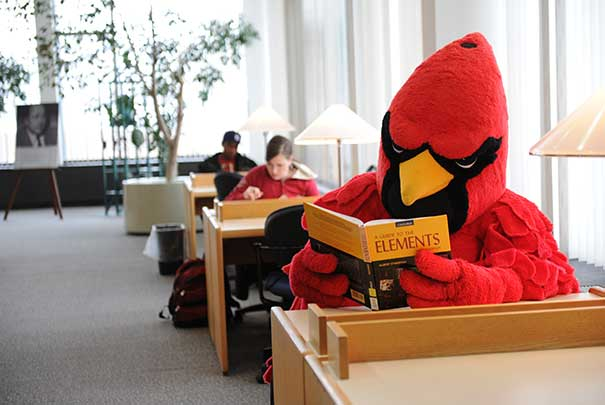 Coop Studying in the Library